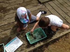 Pond dipping - West Winch Primary