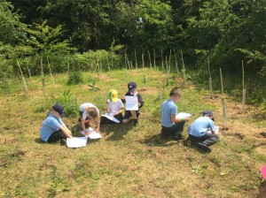 Nature trail - West Winch Primary
